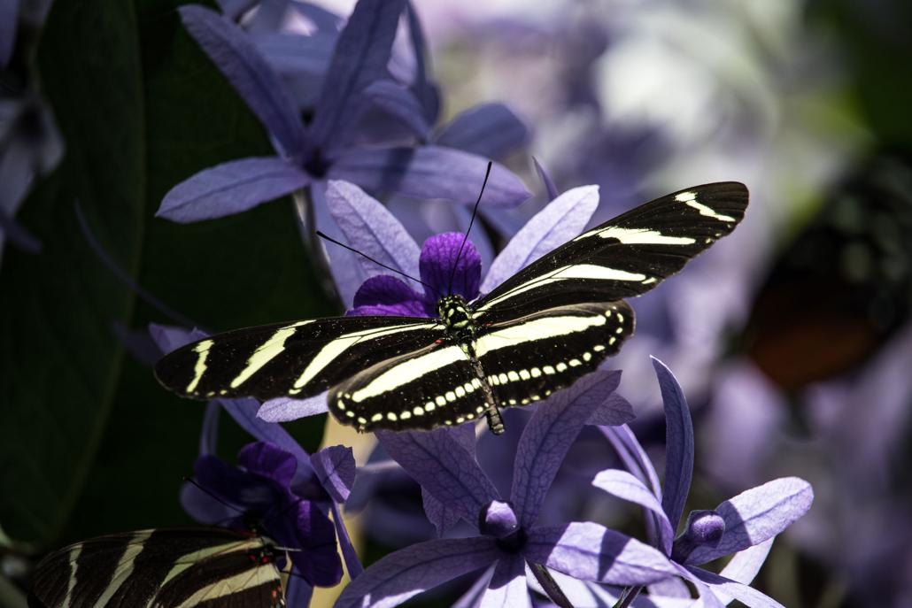 Schmetterling, Kreative psychologische Beratung raum Ingolstadt