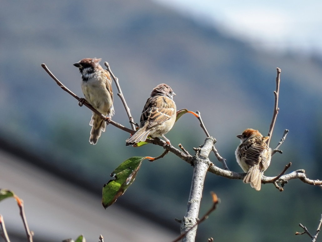 Vogelfamilie, Familienaufstellung