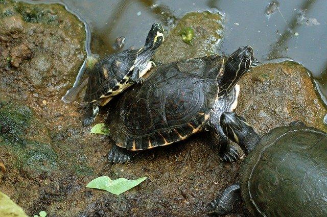 Schildkrötenfamilie, Familienaufstellung