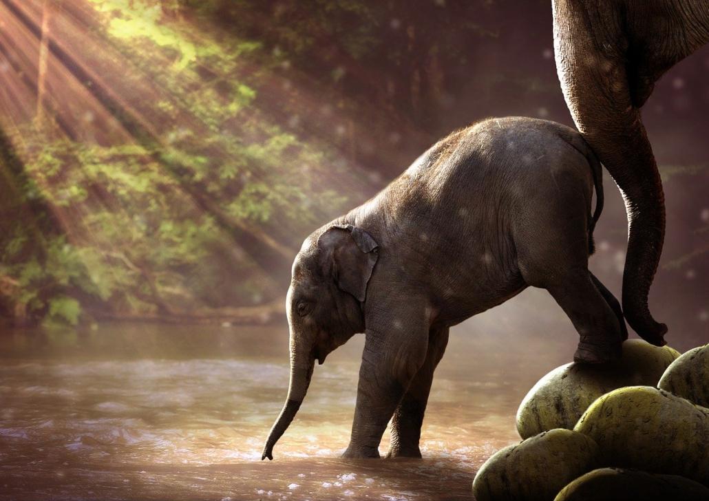 Elefantenbaby, Familienaufstellung