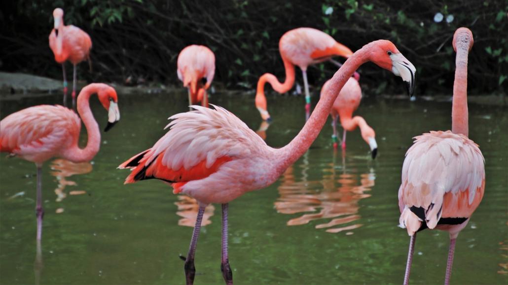 Flamingos Familie, Familienaufstellung