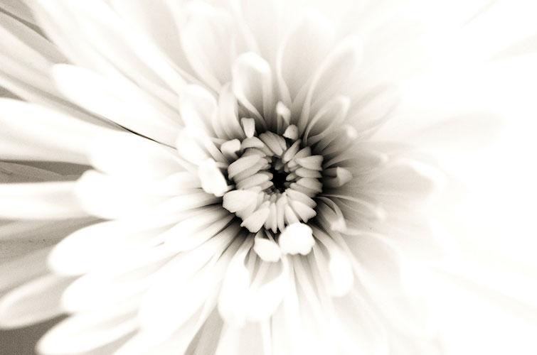 Weise Blume - Mandala, Kreative Lebensberatung von Irina Hempel