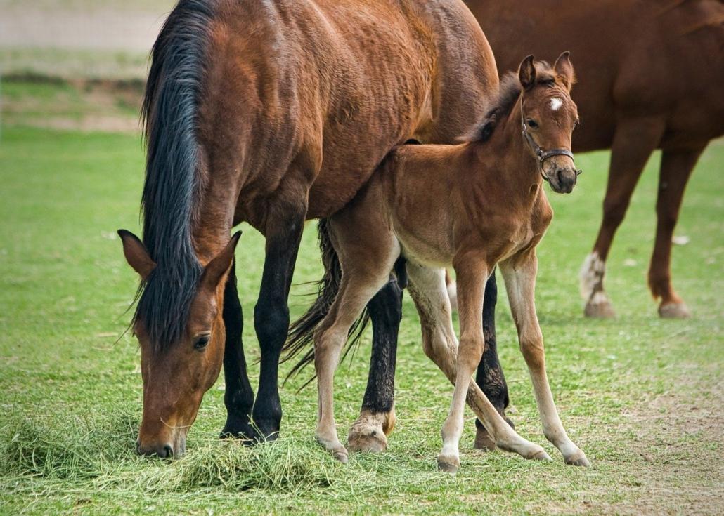 Pferde Baby mit Mama, Familienaufstellung