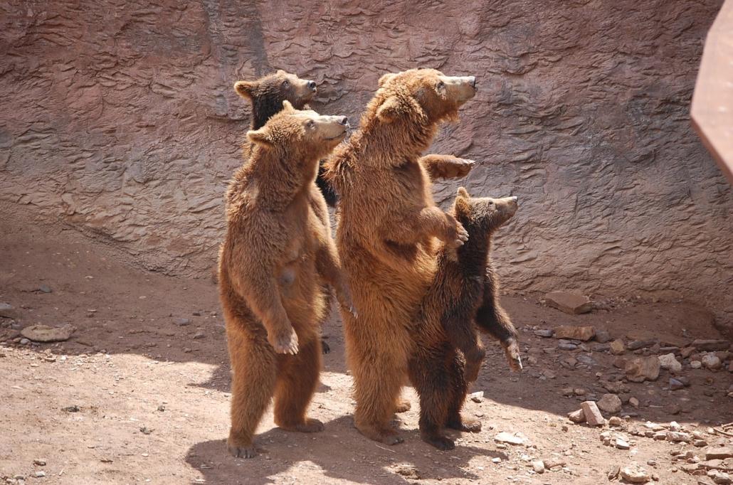 Bärenfamilie, Familienaufstellung mit Irina Hempel