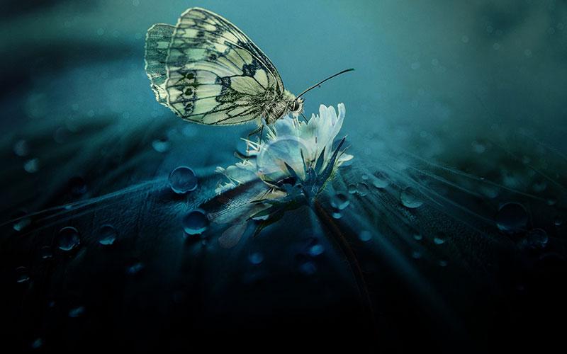 Schmetterling, Kreative Lebensberatung von Irina Hempel