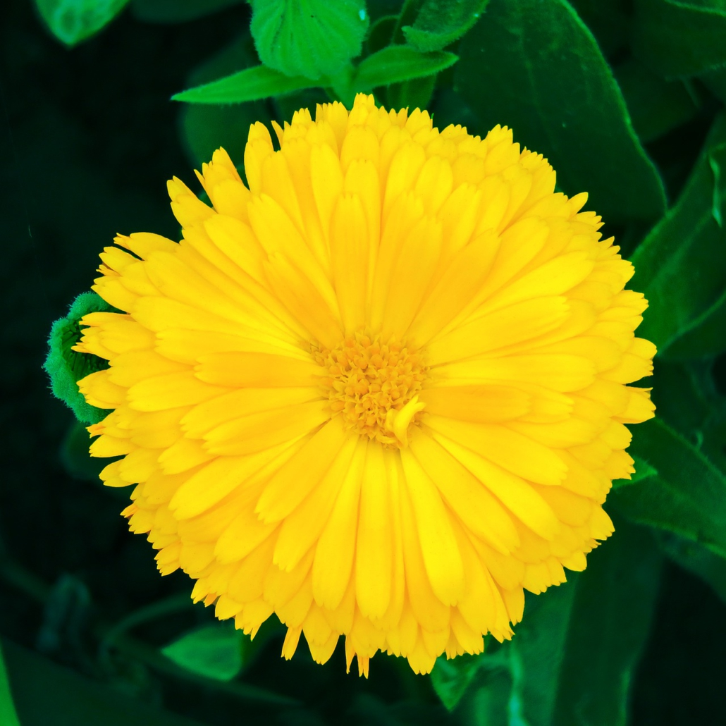Kreativ mit Mandala, Gelbe Blume